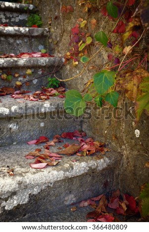 Stone stairway detail with colorful fallen leaves and Ivy - stock photo