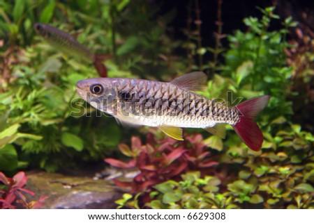 stone sucker fish - stock photo