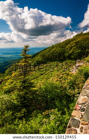 Stone wall and pine tree at overlook on Skyline Drive in Shenandoah National Park, VA. - stock photo