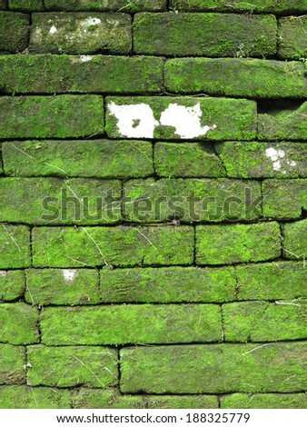 Stone wall covered with moss green.