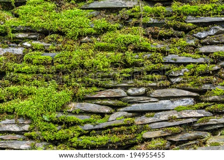 Stone wall with green moss background. - stock photo
