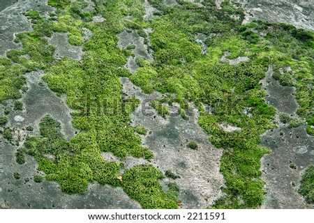 stone with moss - stock photo