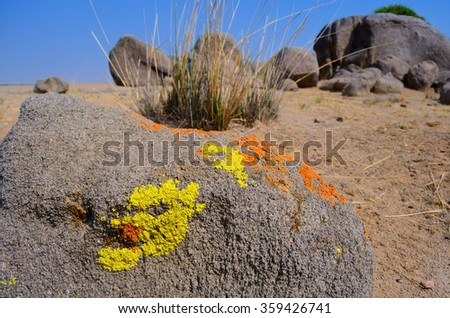 Stone with moss  in desert