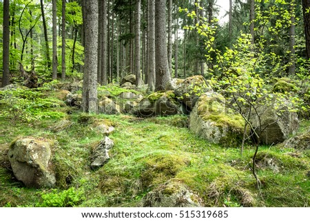 Stones and boulders in the forest