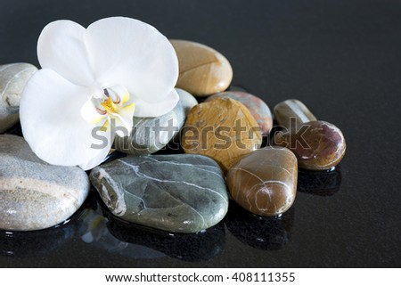 Stones and orchid on black background