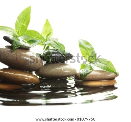 Stones in water with leaves - stock photo