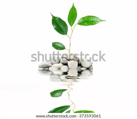 stones isolated on white background - stock photo