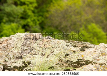 stones, moss, trees, natural texture, succulents - stock photo