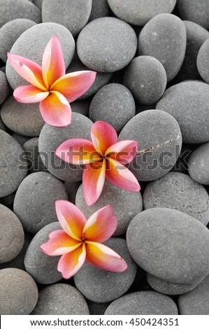 Stones texture with pink frangipani
