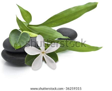 Stones with green leafs and white flower on the white background - stock photo