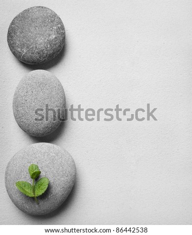 stones with green leaves on the sand - stock photo