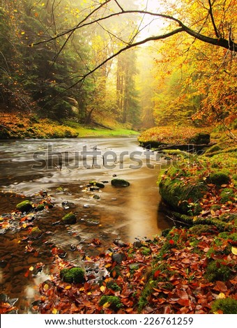 Stony bank of autumn mountain river covered by orange beech leaves. Fresh green mossy big boulders. Green leaves on branches above water make reflection - stock photo