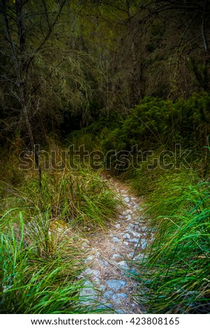 Stony bending path in a countryside among green trees and grass. Walkway in a tropic forest, beautiful landscape photography. - stock photo