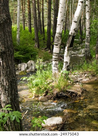 stony creek between wood at summer