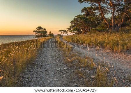 Stony road along with the sea  with crooked pine trees and shining golden grass in early morning sun. - stock photo