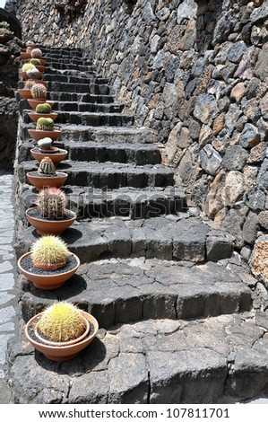 Stony stairs with cactus - stock photo