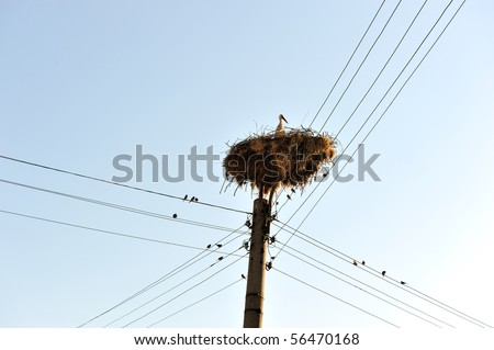 Stork and sparrows around - stock photo