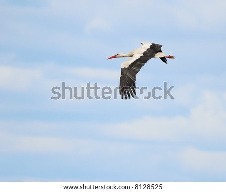 Stork flying in the cloudy blue sky - stock photo