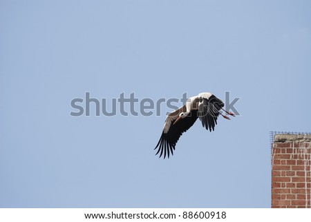 Stork flying over a chimney