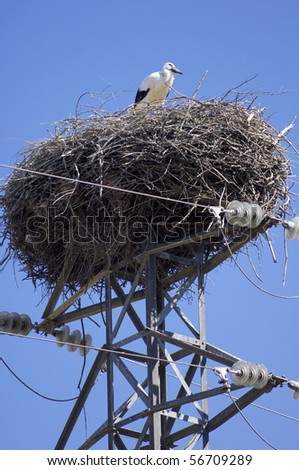 Stork in a high tension tower - stock photo