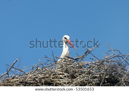 Stork in nest on a blue background - stock photo