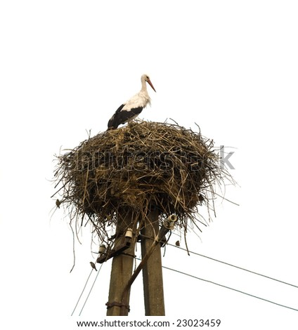 stork in nest on white background