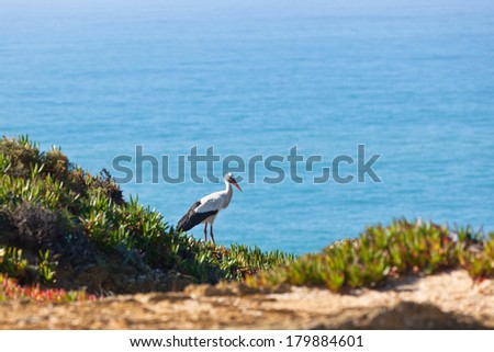 Stork on a Cliff at Western Coast of Portugal. Horizontal shot - stock photo