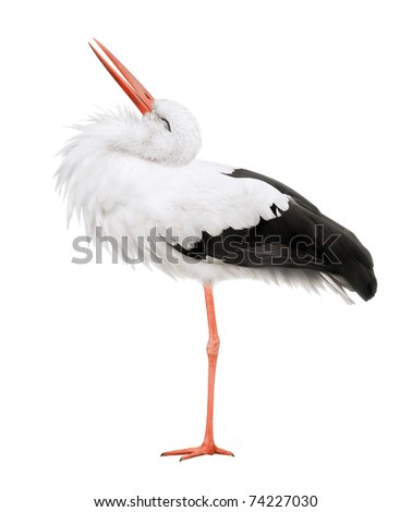 Stork on a white background - stock photo