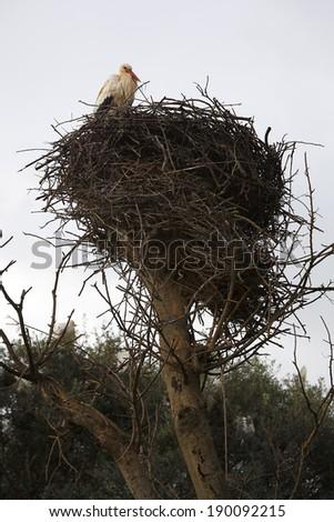Stork sitting in the nest in Morocco - stock photo