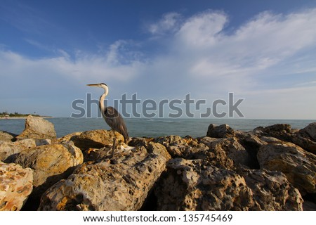 Stork Stork hanging out on the rocks at Sanibel Island of the coast of western Florida. - stock photo
