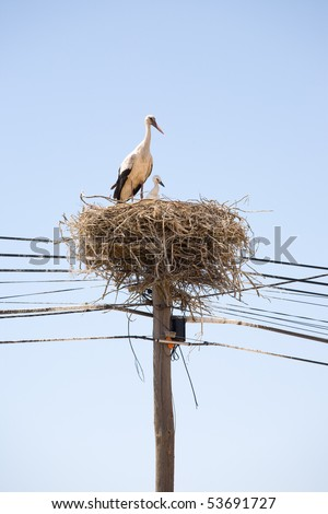 Stork with a baby in the nest - stock photo
