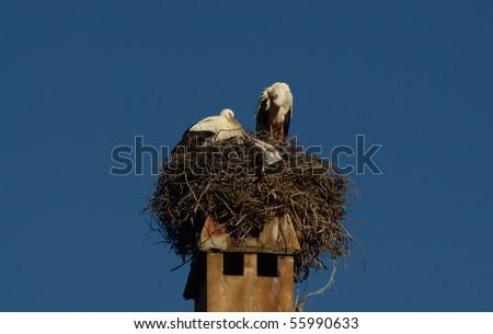Storks - stock photo