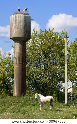 Storks and horse - stock photo