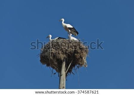 Storks in its nest over a clear blue sky - stock photo