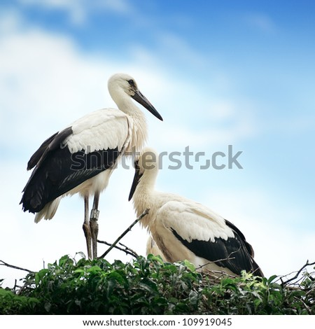 Storks in the nest on the background of the cloudy sky - stock photo