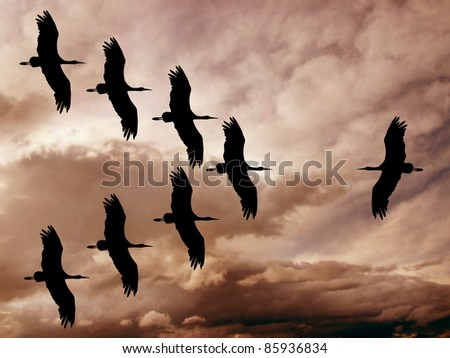 storks in war - stock photo