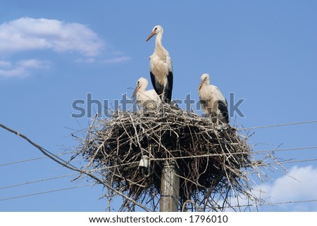 storks on the nest - stock photo