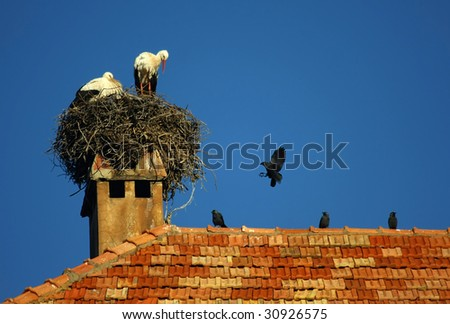 Storks on the Roof - stock photo
