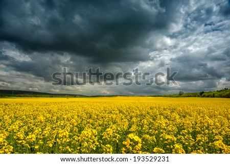 Storm clouds above a rape seed field - stock photo