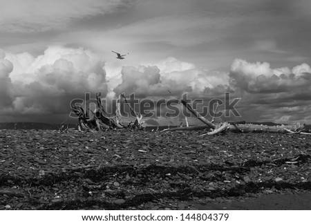 Storm clouds and driftwood on an Alaskan beach with sea gulls flying by in black and white. - stock photo