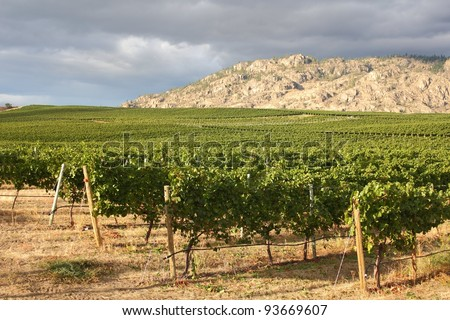 Storm clouds build over a vineyard in the Okanagan Valley, British Columbia, Canada. - stock photo