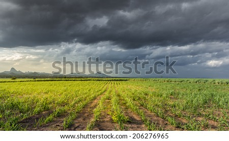storm clouds over Sugarcane  - stock photo