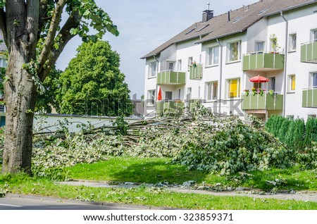 Storm damage, uprooted trees caused by a major storm.