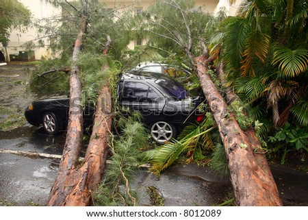 Storm damaged pine tree fell on top of cars. - stock photo