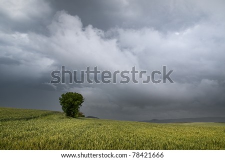 Storm over green cereal field - stock photo
