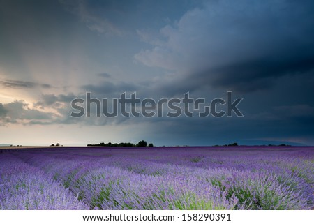 Storm over lavender field - stock photo