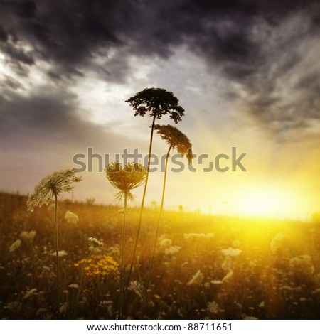 Stormy clouds at twilight and field of wild grass. - stock photo