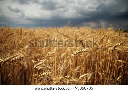 Stormy field - stock photo
