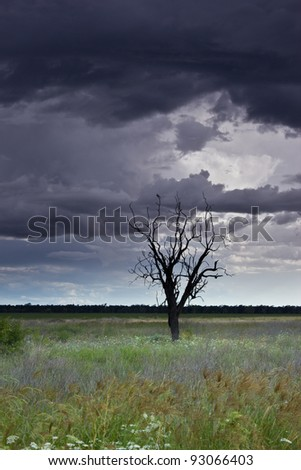 Stormy sky over a field of flowers - stock photo