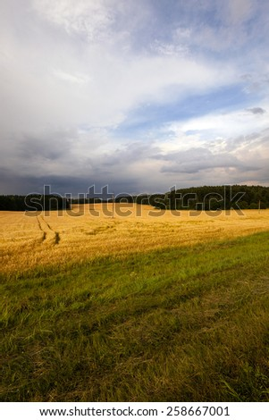 Stormy sky over an agricultural field. - stock photo
